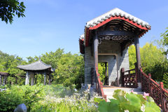 Κινεζικός κλασσικός κήπος με τη ορχιδέα λωτού και αραχνών Στοκ φωτογραφία με δικαίωμα ελεύθερης χρήσης