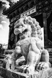 κινεζικό άγαλμα λιονταριών Στοκ Εικόνες