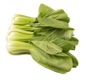 Κινεζικό λάχανο ή Bok Choy ΙΧ Στοκ εικόνες με δικαίωμα ελεύθερης χρήσης