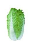 Κινεζικό λάχανο που απομονώνεται στο άσπρο υπόβαθρο Στοκ Εικόνες
