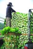 Κινεζικό λάχανο Στοκ φωτογραφία με δικαίωμα ελεύθερης χρήσης