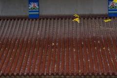 Κινεζικό βερνικωμένο κεραμίδι Στοκ Εικόνες