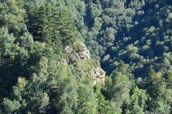 Κινεζικό βουνό με τα δέντρα Στοκ Εικόνες