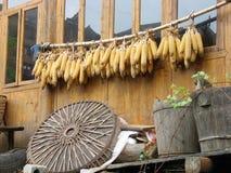 κινεζικό καλαμπόκι που κ& Στοκ εικόνα με δικαίωμα ελεύθερης χρήσης