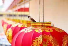 κινεζικό νέο έτος φαναριών Στοκ φωτογραφίες με δικαίωμα ελεύθερης χρήσης