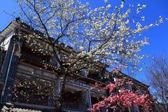 Κινεζικό παραδοσιακό κτήριο και άσπρα λουλούδια στοκ εικόνες