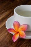 κινεζικό πράσινο τσάι plumeria τρ&omicro Στοκ εικόνες με δικαίωμα ελεύθερης χρήσης