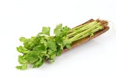 Κινεζικό σέλινο, σέλινο, Smaltage (Apium graveolens Linn ) στοκ φωτογραφία με δικαίωμα ελεύθερης χρήσης