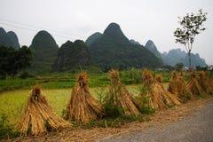 Κινεζικό τοπίο πεδίων ρυζιού Στοκ Εικόνες