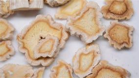 Κινεζικό χορτάρι της βάσης Platycodonis ή της ρίζας Balloonflower απόθεμα βίντεο