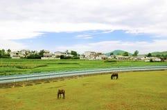 κινεζικό χωριό αλόγων στοκ φωτογραφίες με δικαίωμα ελεύθερης χρήσης