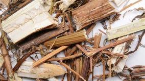 Κινεζικό Herba Artemisiae Annuae ιατρικής χορταριών ή γλυκό Wormwood χορτάρι απόθεμα βίντεο