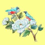 Κινεζικό peony λουλούδι Watercolor Στοκ φωτογραφία με δικαίωμα ελεύθερης χρήσης
