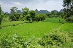 κινεζικό yangshuo ρυζιού πεδίων &tau Στοκ εικόνες με δικαίωμα ελεύθερης χρήσης