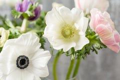 Κινηματογράφηση σε πρώτο πλάνο άσπρα anemones Λουλούδια της χειμερινής εποχής Stamens και pistils Μεγάλο ελαφρύ υπόβαθρο Μακροεντ Στοκ φωτογραφία με δικαίωμα ελεύθερης χρήσης