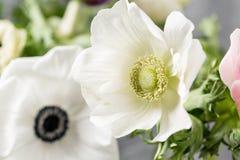 Κινηματογράφηση σε πρώτο πλάνο άσπρα anemones Λουλούδια της χειμερινής εποχής Stamens και pistils Μεγάλο ελαφρύ υπόβαθρο Μακροεντ Στοκ Φωτογραφία