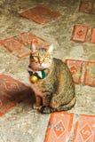 Κινηματογράφηση σε πρώτο πλάνο ένα χαριτωμένη γάτα μπροστά από το κατάστημα στο χωριό Jiufen, Taiwa Στοκ Φωτογραφία