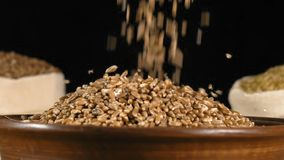 Κινηματογράφηση σε πρώτο πλάνο, σε αργή κίνηση, πτώση σιταριών σίτου σε ένα ξύλινο πιάτο που γεμίζει το φιλμ μικρού μήκους