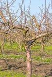 Κινηματογράφηση σε πρώτο πλάνο δέντρων της Apple σε έναν κήπο άνοιξη Στοκ φωτογραφίες με δικαίωμα ελεύθερης χρήσης