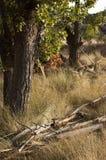 Κινηματογράφηση σε πρώτο πλάνο ενός δέντρου Παλαιοί κλάδοι στο έδαφος στοκ φωτογραφία