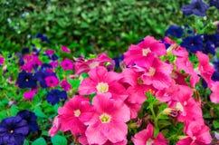 Κινηματογράφηση σε πρώτο πλάνο ενός κήπου λουλουδιών Στοκ Εικόνα