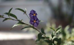 Κινηματογράφηση σε πρώτο πλάνο ενός λουλουδιού στοκ εικόνα με δικαίωμα ελεύθερης χρήσης