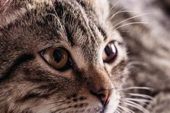 Κινηματογράφηση σε πρώτο πλάνο ενός ματιού γατών ` s στοκ εικόνα