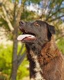 Κινηματογράφηση σε πρώτο πλάνο ενός μαύρου σκυλιού στοκ φωτογραφία με δικαίωμα ελεύθερης χρήσης