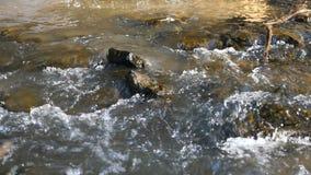Κινηματογράφηση σε πρώτο πλάνο ενός ποταμού βουνών, γρήγορα τρέχουσα απόθεμα βίντεο