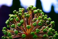 Κινηματογράφηση σε πρώτο πλάνο ενός φυτού Στοκ Φωτογραφίες