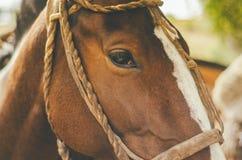 Κινηματογράφηση σε πρώτο πλάνο ενός όμορφου εξημερωμένου αλόγου στοκ εικόνες με δικαίωμα ελεύθερης χρήσης