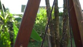 Κινηματογράφηση σε πρώτο πλάνο ιστών αράχνης στον αέρα, όμορφος Ιστός αραχνών ` s απόθεμα βίντεο