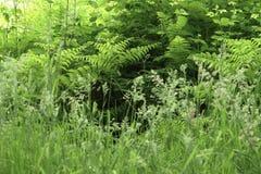 Κινηματογράφηση σε πρώτο πλάνο και λεπτομέρεια στις χλόες στο άγριο λιβάδι Στοκ φωτογραφία με δικαίωμα ελεύθερης χρήσης