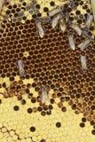 Κινηματογράφηση σε πρώτο πλάνο κυψελωτών κυττάρων με το μέλι Στοκ φωτογραφία με δικαίωμα ελεύθερης χρήσης
