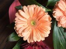 Κινηματογράφηση σε πρώτο πλάνο λουλουδιών χρυσάνθεμων οφθαλμών Διακόσμηση λουλουδιών φιαγμένη από χρυσάνθεμα, διακοσμητικές εγκατ Στοκ Φωτογραφίες