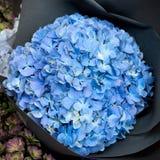 Κινηματογράφηση σε πρώτο πλάνο λουλουδιών Hydrangea Στοκ φωτογραφίες με δικαίωμα ελεύθερης χρήσης