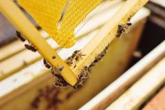 Κινηματογράφηση σε πρώτο πλάνο μελισσών σε ένα πλαίσιο μελισσουργείων στοκ φωτογραφίες