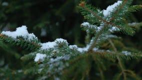 Κινηματογράφηση σε πρώτο πλάνο με τη μετατόπιση της εστίασης στις νιφάδες χιονιού που προσγειώνονται στους κλάδους δέντρων έλατου απόθεμα βίντεο