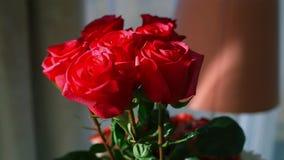 Κινηματογράφηση σε πρώτο πλάνο μιας ανθοδέσμης των κόκκινων τριαντάφυλλων απόθεμα βίντεο