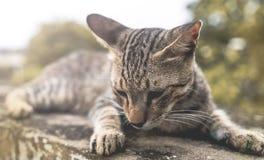 Κινηματογράφηση σε πρώτο πλάνο μιας γάτας στοκ φωτογραφία
