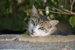 Κινηματογράφηση σε πρώτο πλάνο μιας γκρίζας γάτας με τα πράσινα μάτια στοκ φωτογραφία