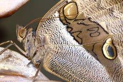 Κινηματογράφηση σε πρώτο πλάνο μιας πεταλούδας Στοκ φωτογραφία με δικαίωμα ελεύθερης χρήσης