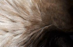 Κινηματογράφηση σε πρώτο πλάνο μιας σύστασης γουνών από το κεφάλι γατών ` s Στοκ Φωτογραφίες