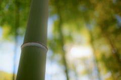 Κινηματογράφηση σε πρώτο πλάνο μπαμπού στο Τόκιο, Ιαπωνία Στοκ Εικόνα