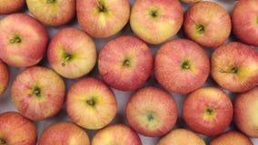 Κινηματογράφηση σε πρώτο πλάνο περιστροφής, υπόβαθρο των κόκκινων μήλων απόθεμα βίντεο