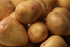 Κινηματογράφηση σε πρώτο πλάνο που βλασταίνεται των άσπρων russet πατατών στοκ εικόνες