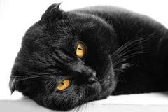 Κινηματογράφηση σε πρώτο πλάνο που κοιμάται τη σοβαρή μαύρη γάτα με τα κίτρινα μάτια στο σκοτάδι FA Στοκ Εικόνα