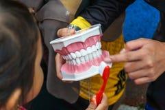 Κινηματογράφηση σε πρώτο πλάνο που πυροβολείται ενός θηλυκού εκπαιδευτικού που αντέχει ένα αντίγραφο δοντιών Στοκ Εικόνες