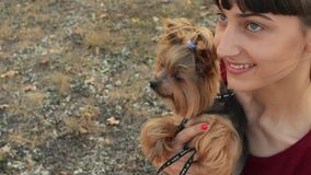 Κινηματογράφηση σε πρώτο πλάνο που πυροβολείται ενός χαμογελώντας καυκάσιου κοριτσιού και ενός μικρού τεριέ του Γιορκσάιρ σκυλιών φιλμ μικρού μήκους