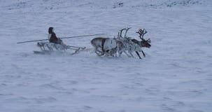 Κινηματογράφηση σε πρώτο πλάνο που τρέχει τους γρήγορους ταράνδους και το άτομο σε ένα έλκηθρο στη μέση του αρκτικού όμορφου βίντ απόθεμα βίντεο